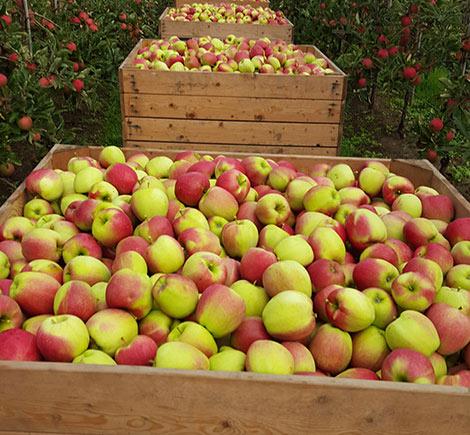 wellner appels